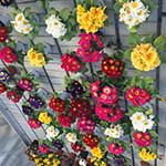 Экскурсия в «Мир Цветов»